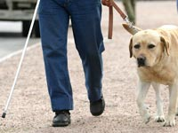 עיוור עם כלב נחייה / צלם: רויטרס